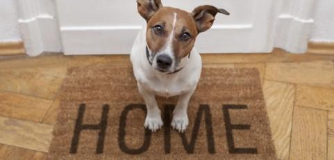 Tecnología para cuidar a nuestras mascotas y facilitar la convivencia